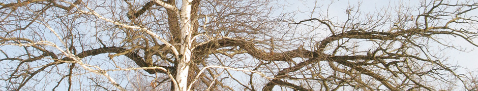 branches_0041