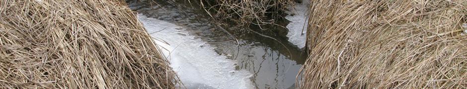 ice_0479