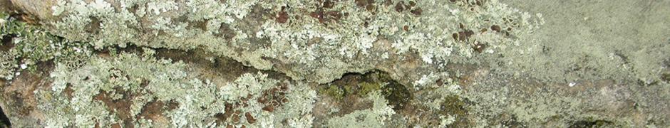 lichen_0533