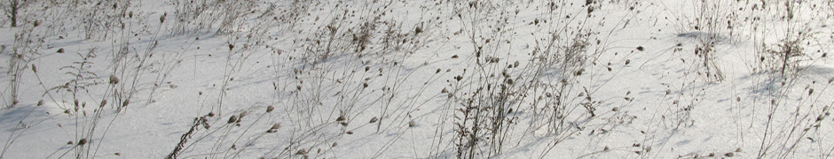 snow_0039