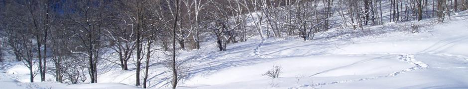snow_0176