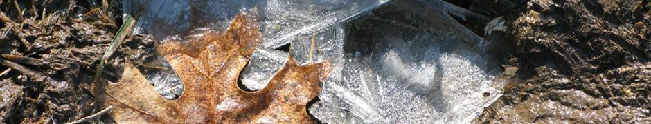 thaw_0851