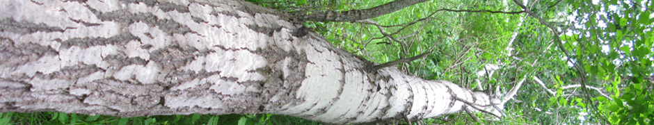 trunk_1761