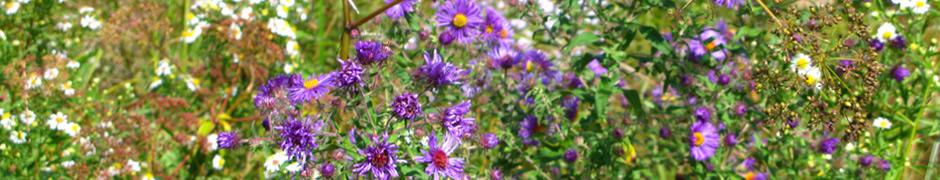 violets_2920