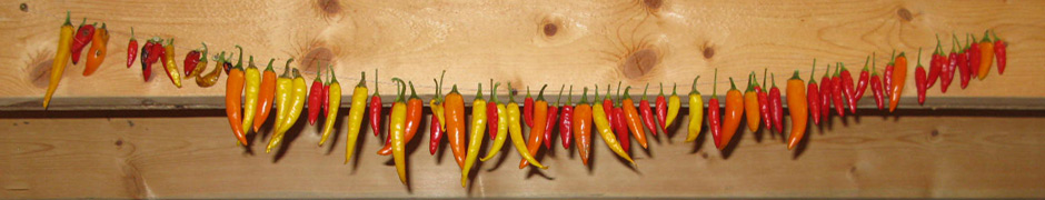 peppers_7784