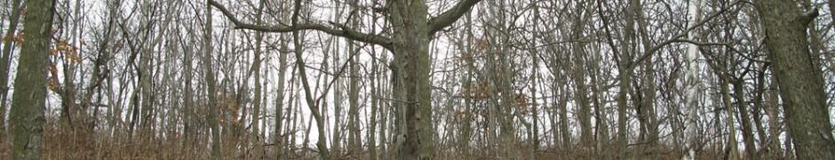 woods_0478